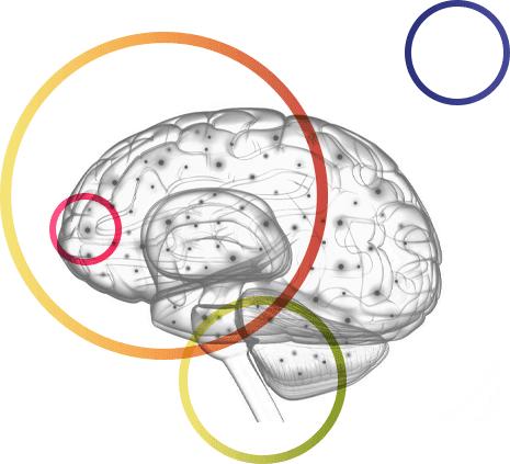 Image représentant un cerveau humain